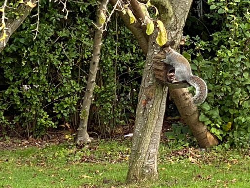 Feeding Time for Wor Squirrel