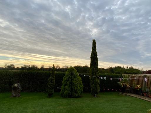Cold Morning in Wor Garden