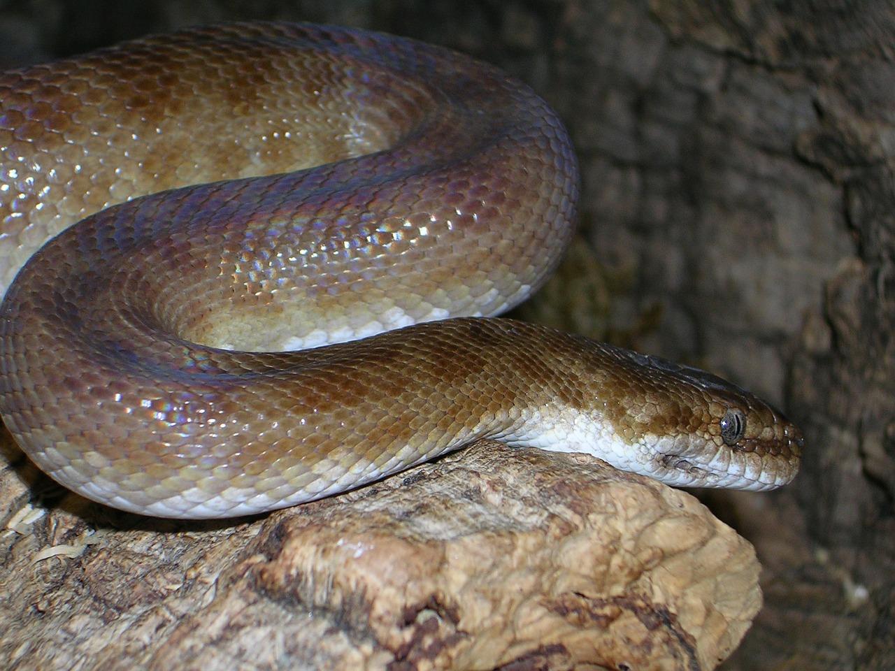 python-401601_1280