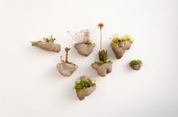 Contenants - Wedding plants 1