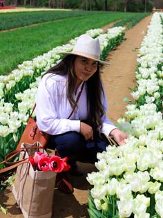 Visit Tulip Fields in NJ at Holland Ridge Farms