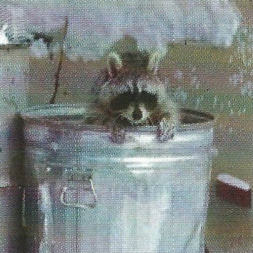 Raccoon Proof Your Recology Trash Can
