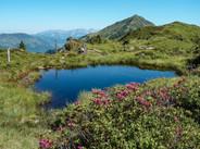 KAT-Walk-Alpin-Etappe-3-Almrosen-mit-Aus
