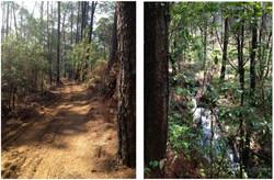 Camino y río