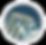 Parikh-and-Prasad-logo-9-19-01_edited_ed