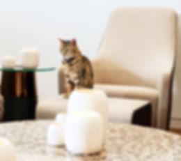 living cat 1_DSC5316_edited_edited.jpg