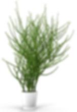 pencil-cactus-3d-model-max-obj-fbx.jpg