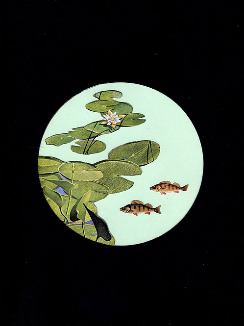 Fishes and waterlilies