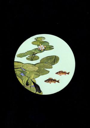 fisk i sø.jpg