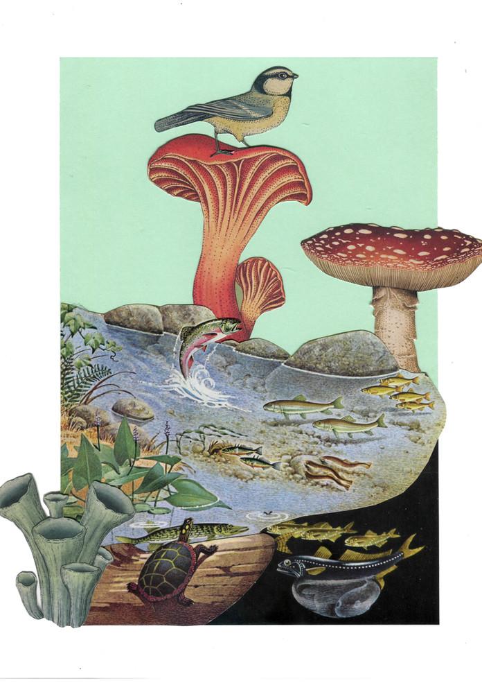 fisk og dyr collage.jpg