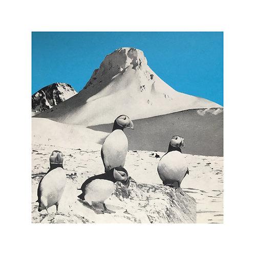 Wannabe penguins