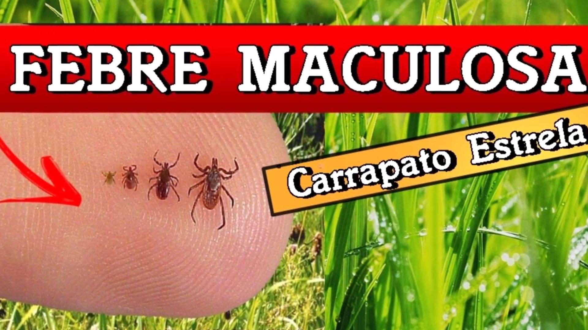 Saúde alerta sobre carrapato estrela e febre maculosa