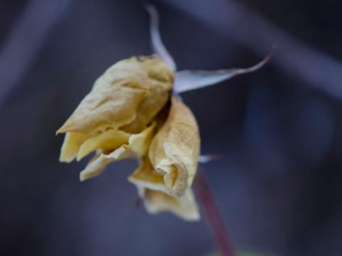 Natur-Fotografie