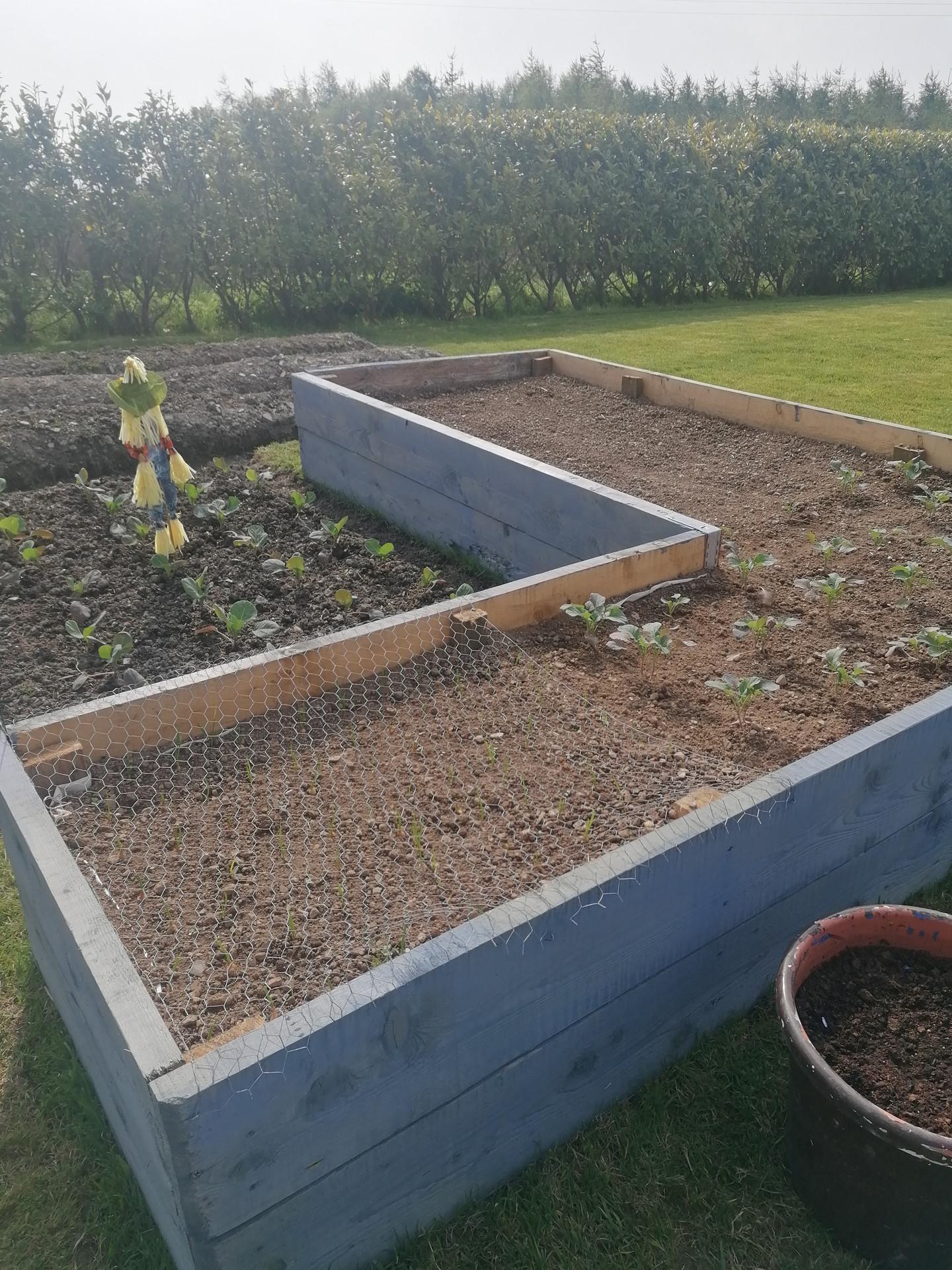 Jamie & Evan's gardening