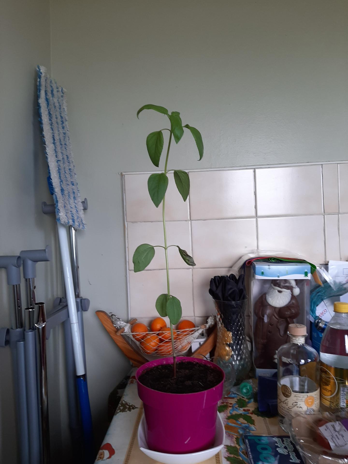 Conor's plant