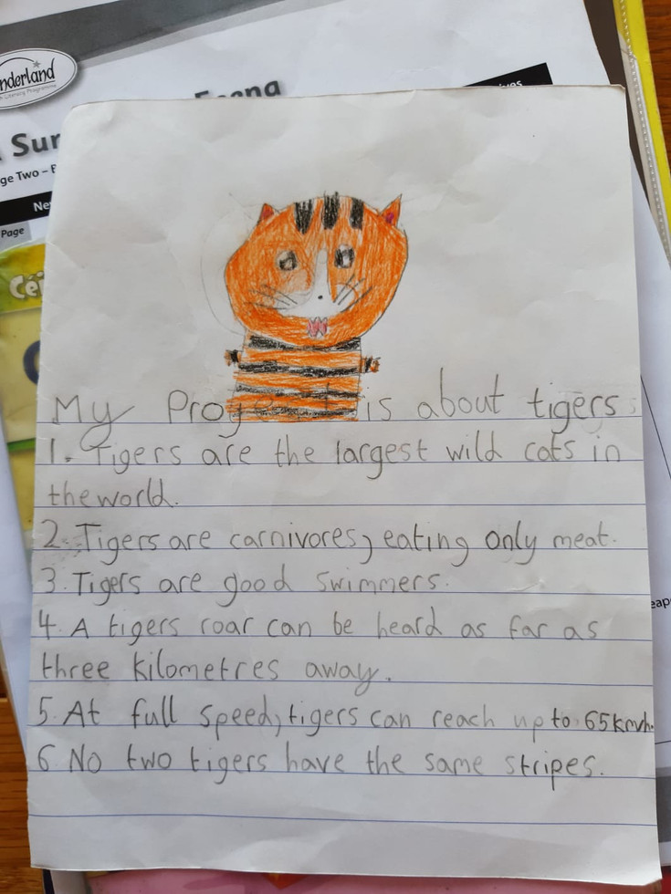 Caoimhes project on Tigers.jpg