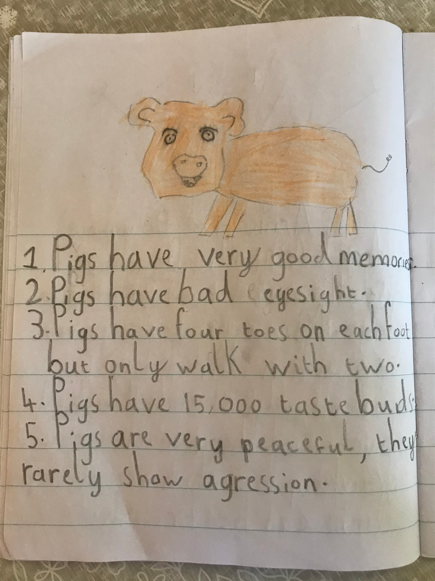 Darragh's animal facts