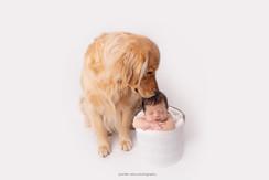 chester-county-newborn-dog.jpg