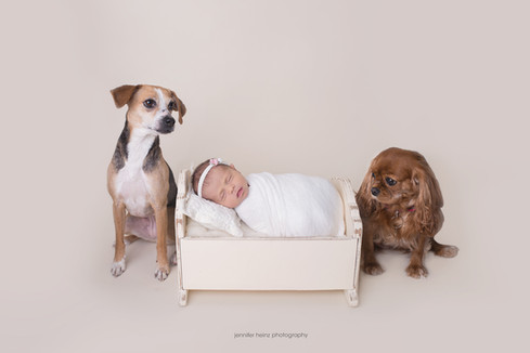 chester-county-newborn-dogs.jpg
