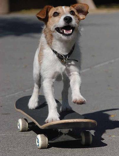 2009-09-03-JonesSkateboards.jpg