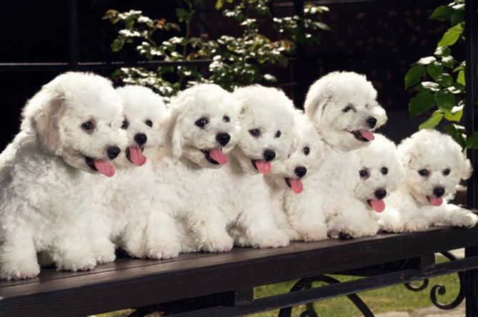 Training-Multiple-Puppies-at-the-Same-Ti
