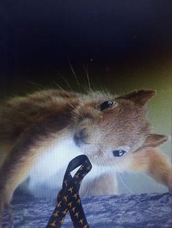 Ruban avec animal