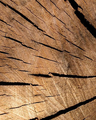 Holz bestcage