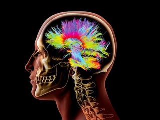 O Projeto Conectoma Humano - Um grande salto no entendimento da mente humana