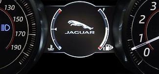 Jaguar Albany