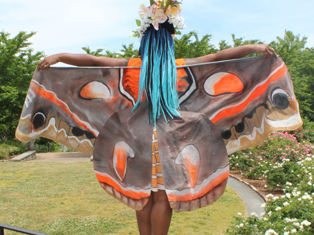 Human Cecropia Spotted in the Garden