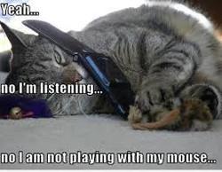 cat phone meme