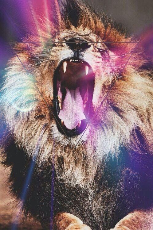 lion rawr