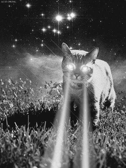 ACID BLANK cat