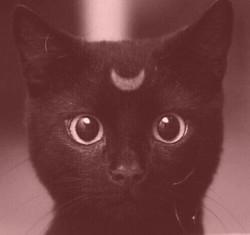 black crescent cat rose red