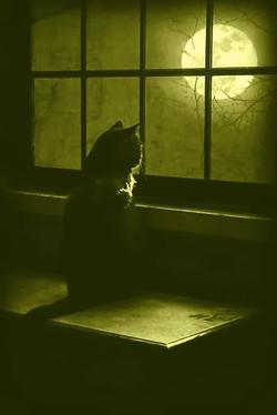 gato y moon yellow wash
