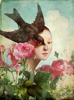 christian shloe roses bird