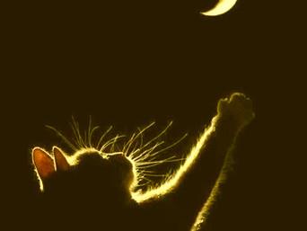 PUSSY CAT NEW MOON