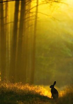 golden bunny