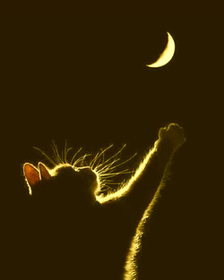 pussy cat moonyellow
