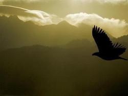 raven sepia landscape