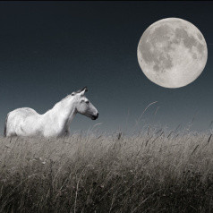 GIDDY UP- it's a SAG FULL MOON