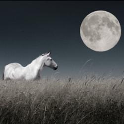 horse moon white
