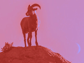 GOAT NEW MOON on FIRE
