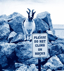 goat rocks cyanatope 2