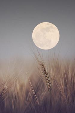 luna del grano -unable to find original source for this picture