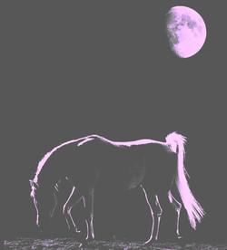 horsy moon pink
