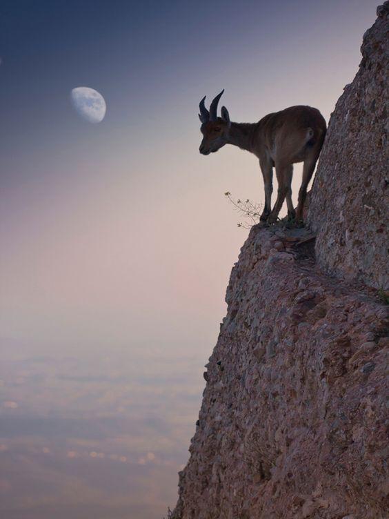 goat moon
