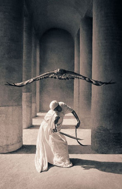 Gregory Colbert falcon