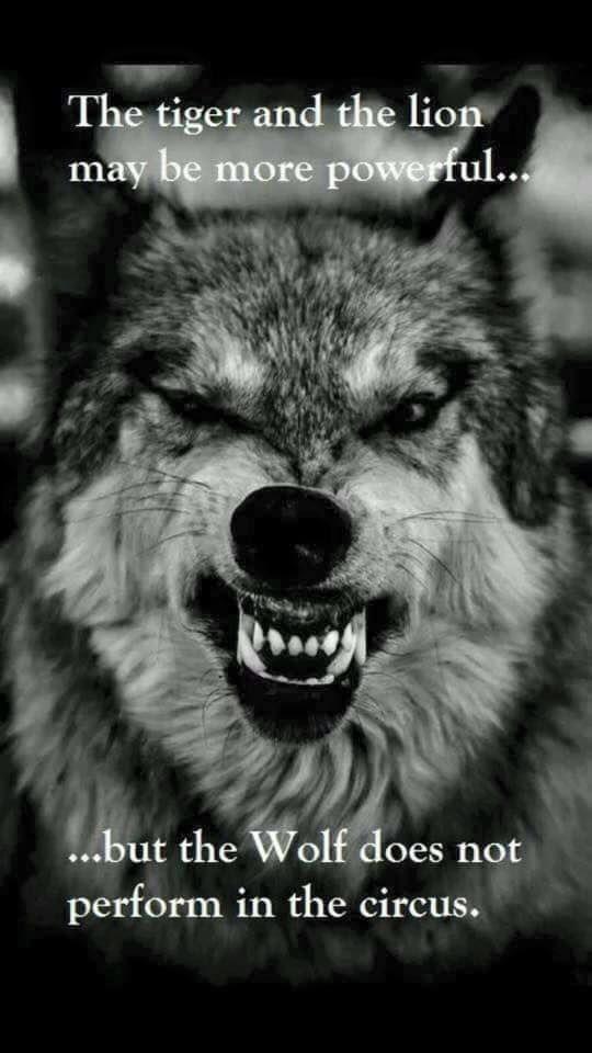 wolf no circus