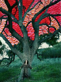 Alexandra Vaneti fire tree